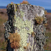 Fence Post Encrusted With Lichen  Art Print