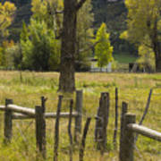 Fence Posts Art Print