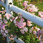 Fence With Pink Roses Art Print