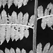 Fern Leaves 1 Art Print