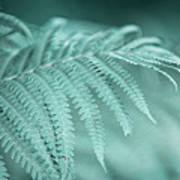 Fern Leaves Abstract 1. Nature In Alien Skin Art Print