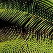 Fern-palm Abtract Art Print