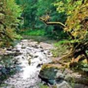 Fern River Oregon Art Print
