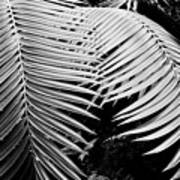 Fern Room Cycads Art Print