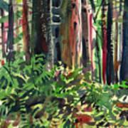 Ferns And Redwoods Art Print