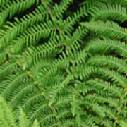 Ferns Au Naturale Art Print