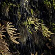 Ferns Below Falls By Jean Noren Art Print