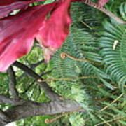 Ferns Come Alive Art Print