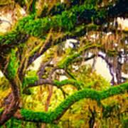 Ferns On Florida Oaks Art Print