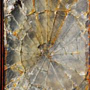 Fibonaccis Muse Art Print