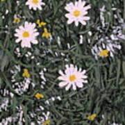 Field Daisies Art Print