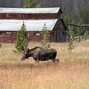 Field Moose Art Print