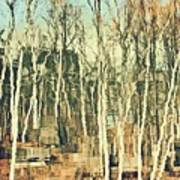 Field Of Birch Art Print