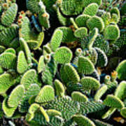 Field Of Cactus Paddles Art Print