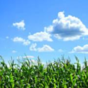 Field Of Corn In August Art Print by Sandra Cunningham
