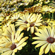 Field Of Daisies Landscape Floral Art Prints Daisy Baslee Troutman Art Print