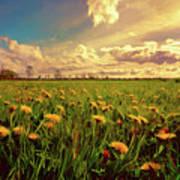 Field Of Dandelions At Sunset Art Print