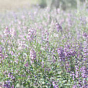 Field Of Lavender Flowers Art Print by Beverly Cazzell