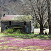 Field Of Lavender  Art Print