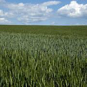 Field Of Wheat Art Print by Bernard Jaubert