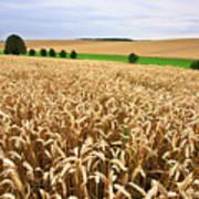 Field Of Wheat Art Print