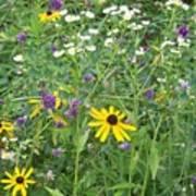Field Of Wildflowers Art Print