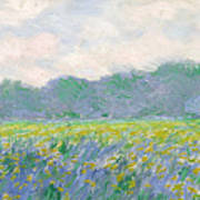 Field Of Yellow Irises At Giverny Art Print