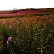 Fields In Pink Art Print