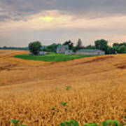 Fields Of Gold, Illinois Art Print