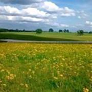Fields Of Yellow Art Print