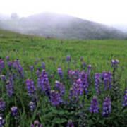 Figueroa Mountain With Fog Art Print