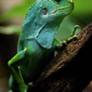 Fiji Iguana In Profile On Tree Branch Art Print