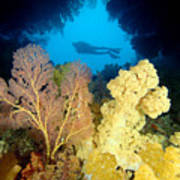Fiji Underwater Art Print by Dave Fleetham - Printscapes
