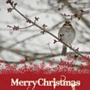 Finch Christmas Art Print