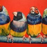 Finches Art Print