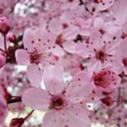Fine Art Prints Spring Pink Blossoms Trees Canvas Baslee Troutman Art Print
