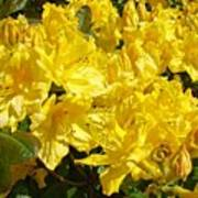 Fine Art Prints Yellow Rhodies Floral Garden Baslee Troutman Art Print