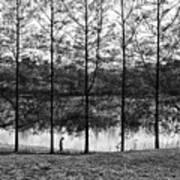Fine Trees Art Print