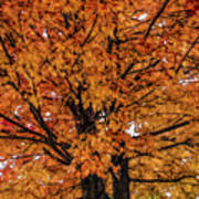 Fine Wine Cafe Golden Tree Art Print
