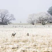 Fingal Winter Farmyard Art Print