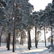 Finland Forest Art Print
