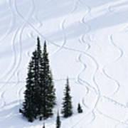Fir And Snow Art Print