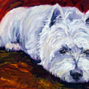 Fire Glow - West Highland White Terrier Art Print by Lyn Cook