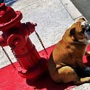 Fireplug Bulldog Art Print