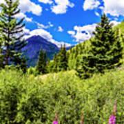 Fireweed, Deer Park Creek, Grand Turk Mountain Art Print