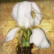 First Iris Art Print