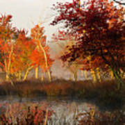 First Light At The Pine Barrens Art Print