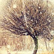 First Snow. Snow Flakes Art Print