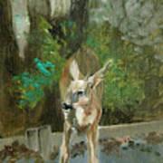 First Young Buck Pad Art Print