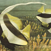 Fish 8 Art Print